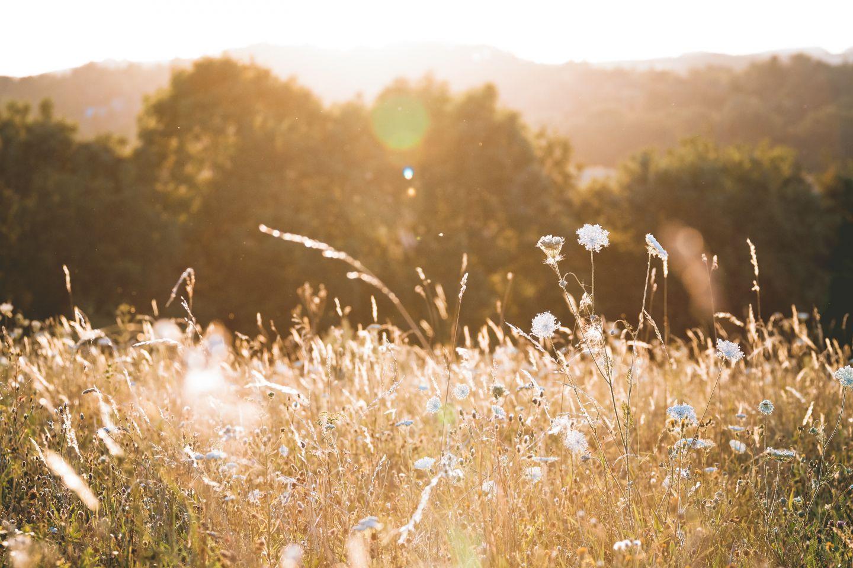 Wohnen mit nachhaltigen Fliesen allergiefrei genießen